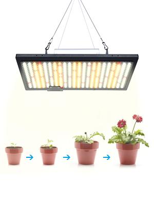 Pflanzenlicht